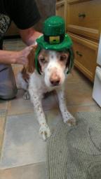 Irish Murphy