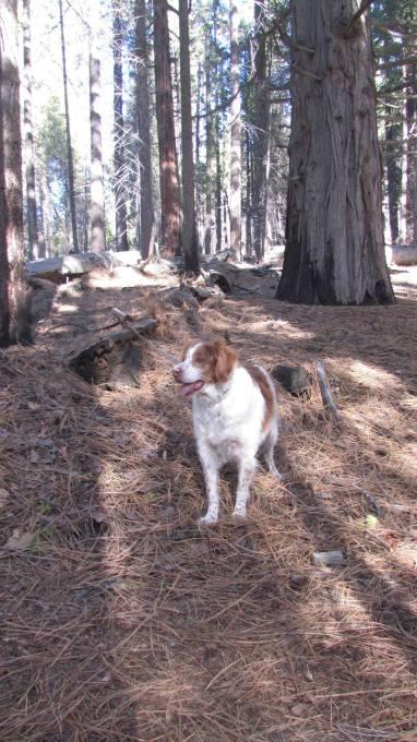Murphy in the woods 3