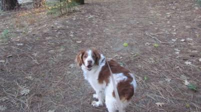 Murphy in the woods 8