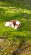 Murphy lawn sleep