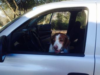 Murphy wants to drive